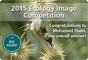 BMC Ecology image competition winner, 2015